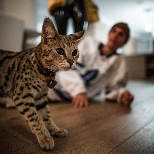 小贾斯汀砸「108万买特种猫」不到一个月就走丢!被发现模样曝光:又冷又瘦