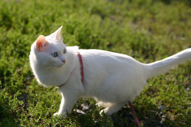 猫咪真的是液体!「梗图始祖」18岁高龄去世 主人:不敢相信